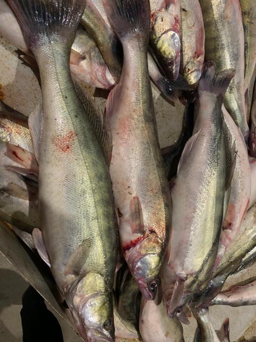 Нередко мы наблюдаем продажу речной рыбы рыболовами-любителями.